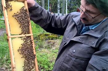Hvittorpin mehiläiset työn touhussa.